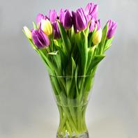튤립(Tulip)화병꽂이